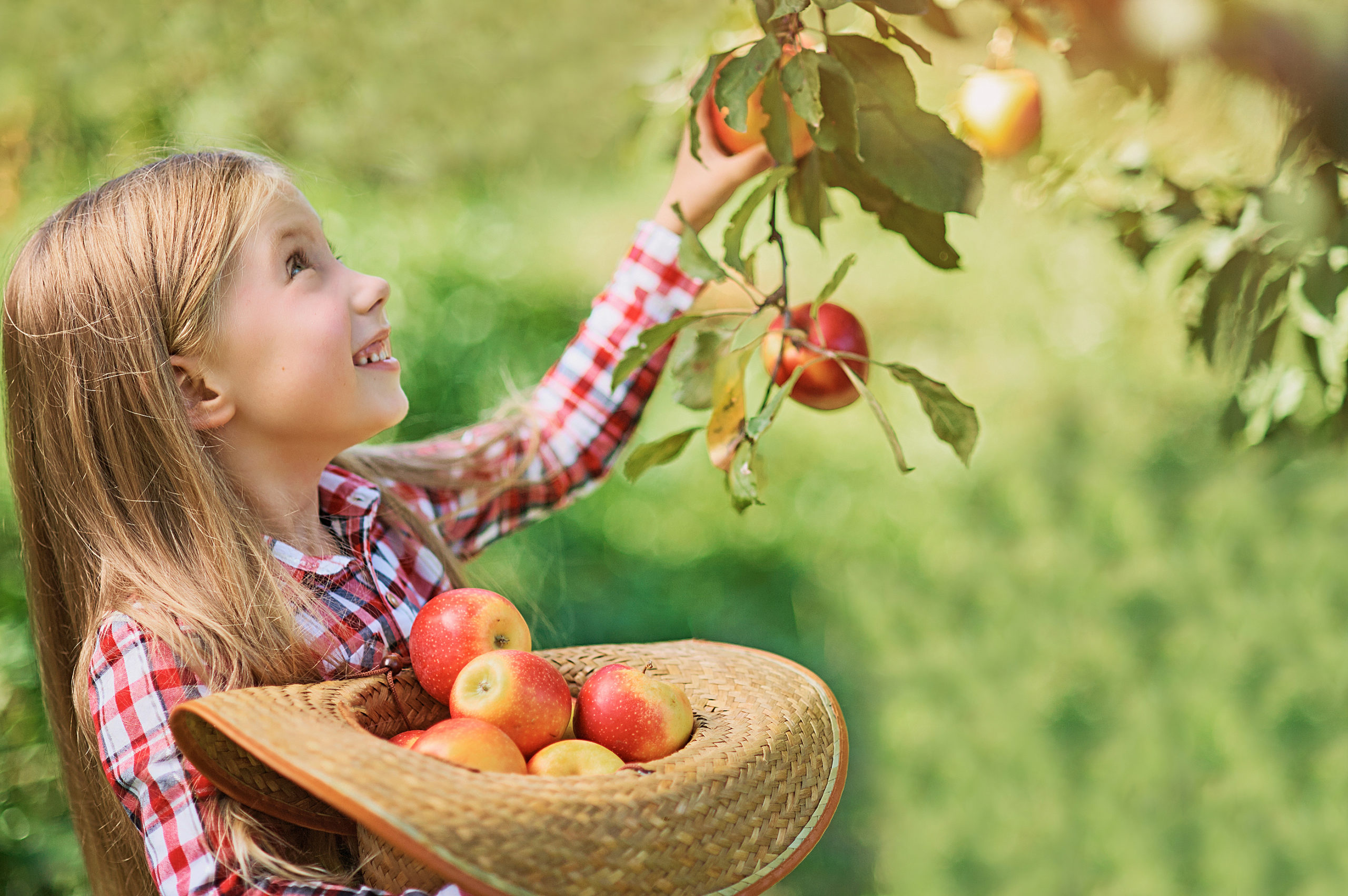 Girl With Apple In The Apple Orchard. Beautiful Girl Eating Orga